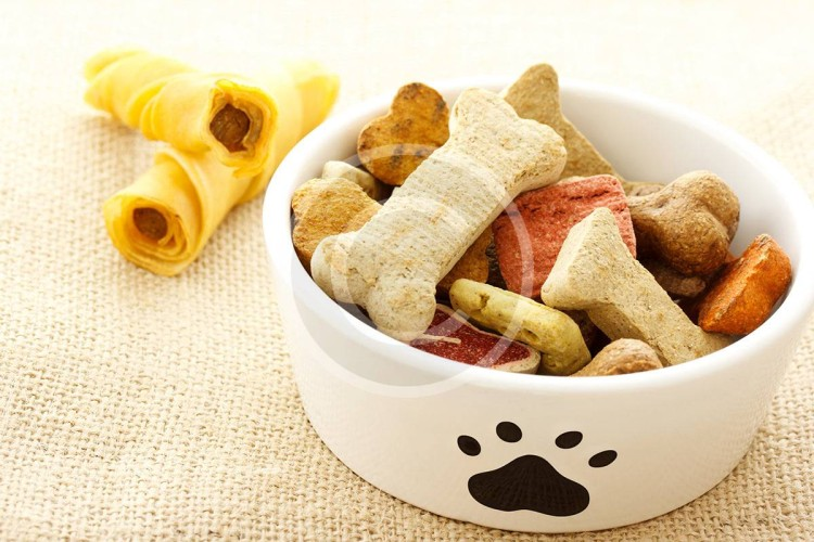 6 Common Pet Food Myths